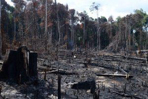 As queimadas na Amazônia assustaram o mundo nos últimos tempos, mas a devastação do bem mais precioso do mundo parece estar apenas no início. Saiba mais.
